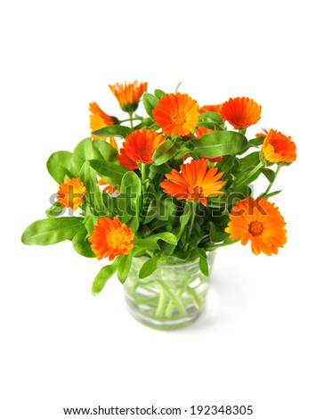 Calendula flowers in a vase, isolated on white - stock photo