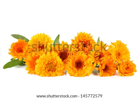Calendula flowers isolated on white - stock photo