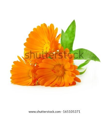 Calendula flowers isolated on white background  - stock photo