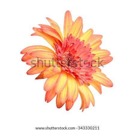 Calendula. Marigold flowers with leaves isolated on white - stock photo