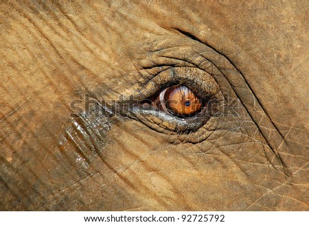 Calf elephant's crying eye after separation with mother in Pinnawela elephant orphanage in Sri Lanka - stock photo