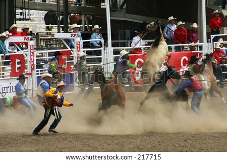 Calgary Stampede Stock Images Royalty Free Images