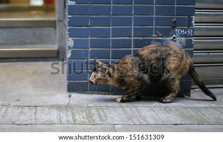 Calico cat is ready to jump - stock photo
