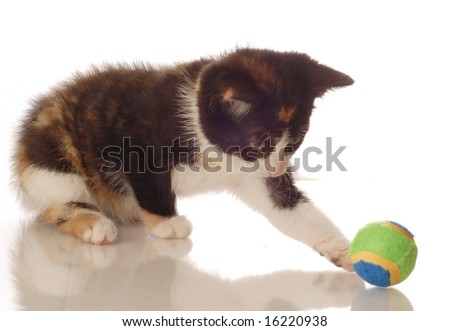 calico kitten playing with a ball - seven weeks old - stock photo