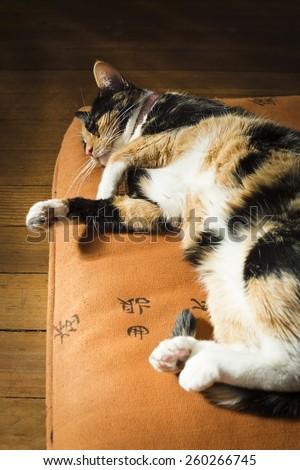 Calico or Tortoiseshell Cat Sleeping on a Pillow - stock photo