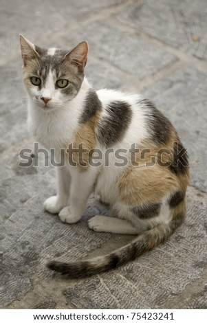 Calico stray cat waiting for food at a cafe in Greece - stock photo