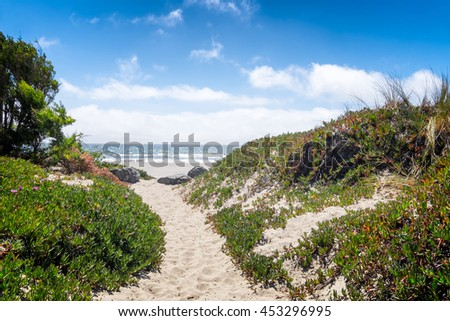 California beach sand path through dunes and ice plant on a sunny day. View of the ocean. Location: Stinson Beach north of San Francisco. Focus is on the foreground vegetation. - stock photo
