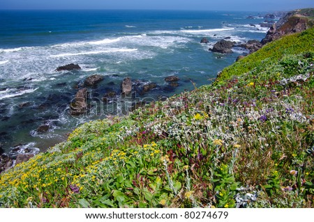 California Coast in June:  Spring wildflowers decorate the rocky coast of California near Bodega Bay. - stock photo