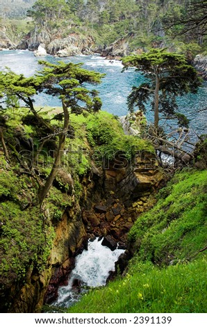 California coastal forest and surf at Point Lobos - stock photo