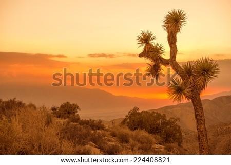 California Desert Scenery at Sunset. Joshua Tree. - stock photo