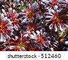 California desert wildflowers! - stock photo