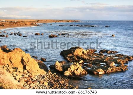 California elephant seal bay - stock photo