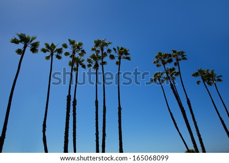 California high palm trees group on blue sky