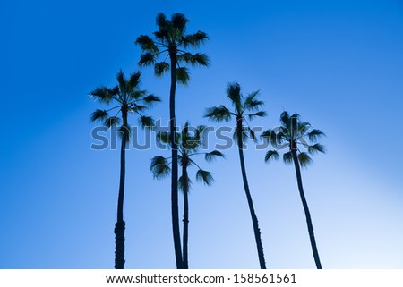 California high palm trees silhouette on blue sky USA