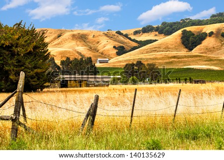 California landscape with rolling golden hills, oak trees and green vineyards.  Location: wine country region of Sonoma and Napa valley. - stock photo