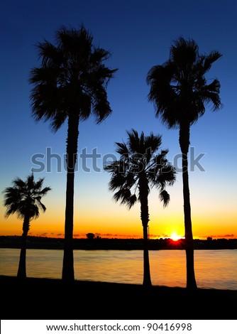 California Palm Trees Sunset, San Diego, California USA - stock photo