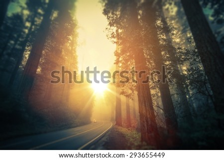 California Redwood Road Trip. Scenic Foggy Redwood Forest Road. California, United States. - stock photo
