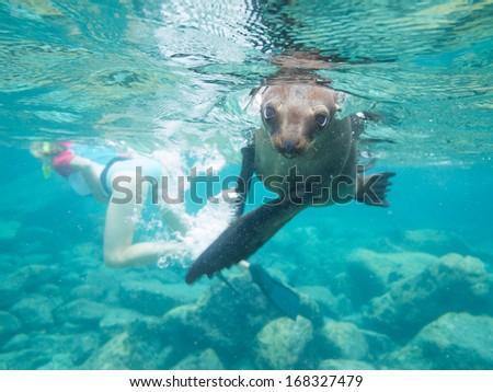 California sea lion in Baja california - stock photo