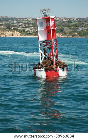 """california sea lions """"Zalophus californianus""""  bask in the sun while they float on an ocean bouy in the warm pacific ocean off the coast of southern california - stock photo"""
