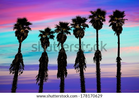 california sunset palm trees washingtonia western surf flavour in US - stock photo