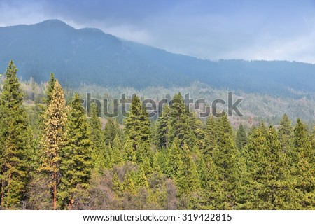 California, United States - National Forest view in Giant Sequoia National Monument. - stock photo