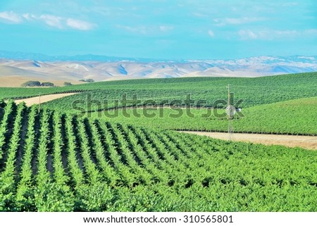 California Vineyards: Rolling hills, valleys, rows of grapevines and wineries are common in the wine country fields of rural Northern and Central California such as Napa, Sonoma and Monterey County. - stock photo