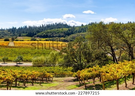 California wine country landscape in autumn - stock photo