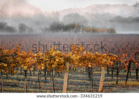 California wine country landscape in winter. Focus is on the foliage in the foreground. - stock photo