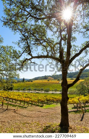 California wine country vineyard landscape with sun flare. Vertical - stock photo