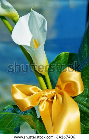 Calla bow - stock photo