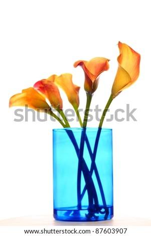 Callas in a vase - stock photo