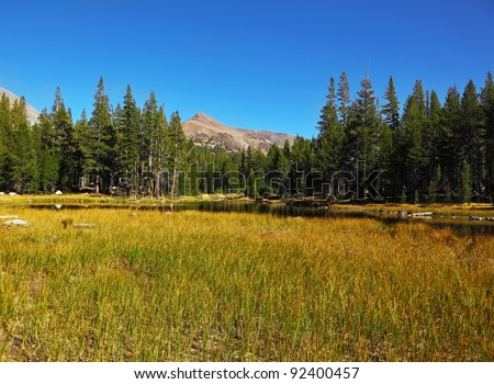 Calm autumn landscape in Yosemite National Park. Yellow and green grass, pine forest and mountains - stock photo