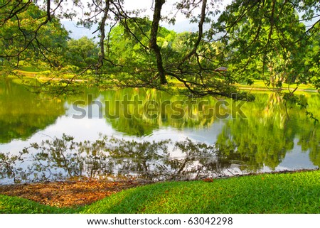 Calm lake covered with overhead tree branches - stock photo