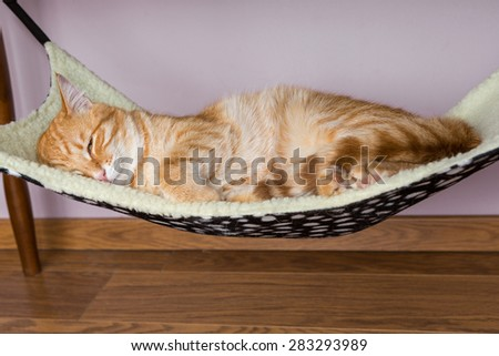 Calm red cat is sleeping in the hammock - stock photo