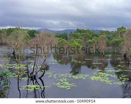 Calm water of crocodile invested swamps in Australia with waterlilies - stock photo