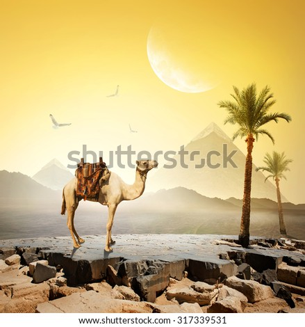 Camel and birds under moon near pyramids.Elements of this image furnished by NASA - stock photo