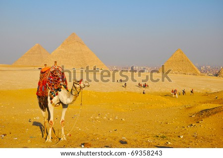 Camel and Great Pyramid of Giza - stock photo