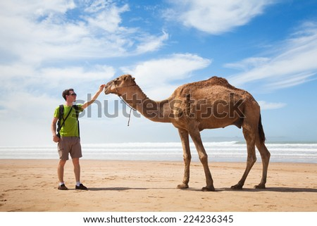 camel and tourist - stock photo