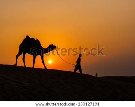 Camel at sunset in Thar Desert near Jaisalmer, Rajasthan, India - stock photo