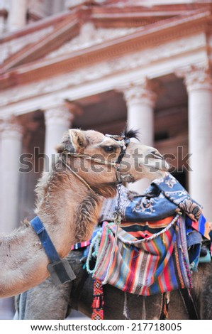 Camel beside Al Khazneh in Petra, Jordan. Al Khazneh was carved out of a sandstone rock face. It has classical Greek-influenced architecture. It is known as the Treasury. - stock photo