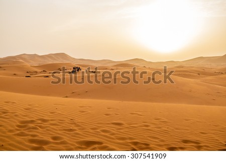 Camel caravan and sand dunes in Merzouga, Morocco, at sunset - stock photo