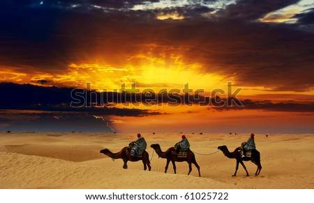 Camel caravan going through desert at sunset. - stock photo