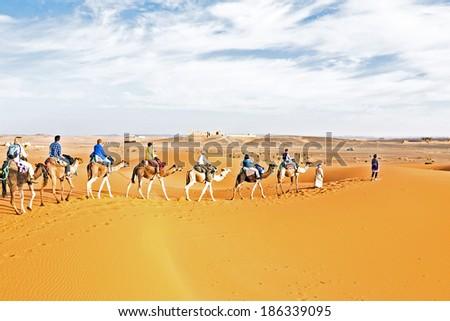 Camel caravan going through the sand dunes in the Sahara - stock photo