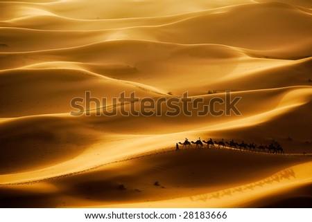 Camel caravan going through the sand dunes in the Sahara Desert, Erg Chebbi, Maroc. - stock photo