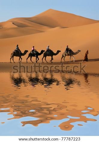 Camel caravan going through the sand dunes in the Sahara Desert, Morocco. - stock photo