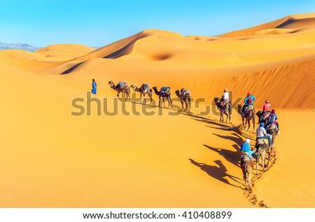 Camel caravan going through the sand dunes in the Sahara Desert. Morocco, Africa - stock photo