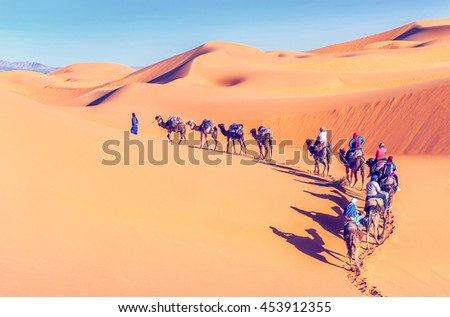 Camel caravan going through the sand dunes in the Sahara Desert. Morocco, Africa