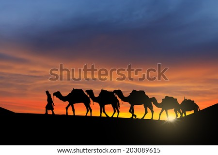 Camel caravan moving in Sahara desert at sunset.