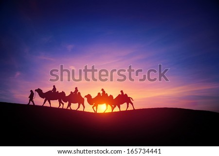 camel caravans traveling in the desert in sunset