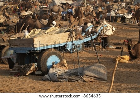 Camel cart surrounded by camels and other camel carts at Pushkar Camel Fair Rajasthan India - stock photo